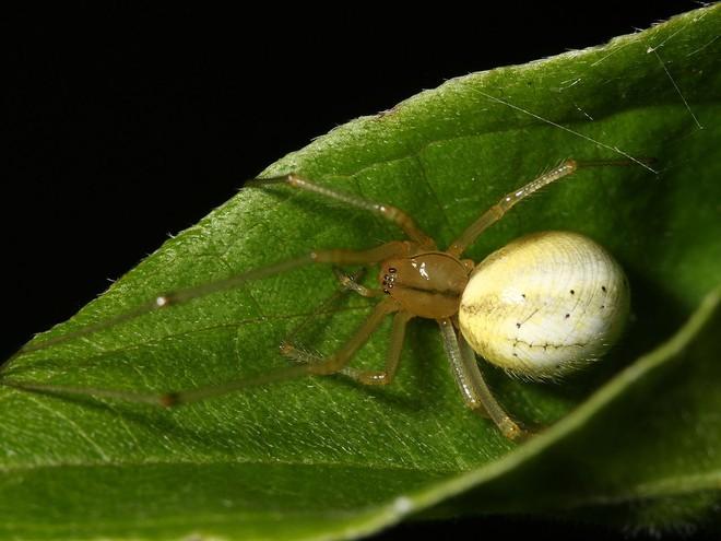 Cứ gặp nhện là đánh – Liệu chúng ta có nên giết những con nhện nhà hay không? - Ảnh 8.