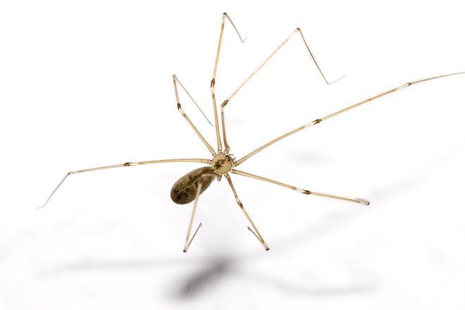 Cứ gặp nhện là đánh – Liệu chúng ta có nên giết những con nhện nhà hay không? - Ảnh 7.
