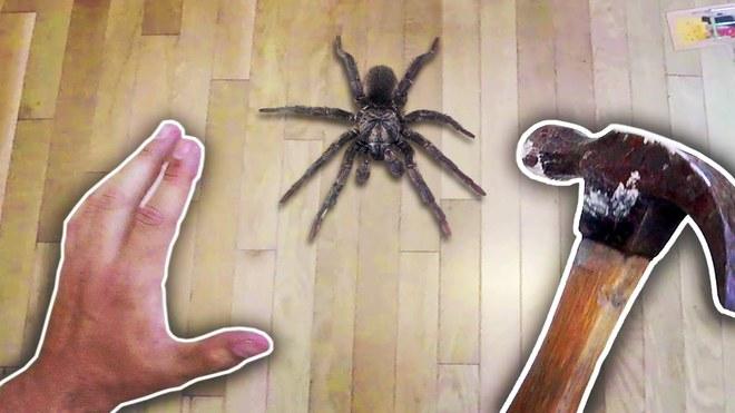 Cứ gặp nhện là đánh – Liệu chúng ta có nên giết những con nhện nhà hay không? - Ảnh 1.
