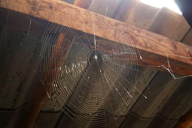 Cứ gặp nhện là đánh – Liệu chúng ta có nên giết những con nhện nhà hay không? - Ảnh 3.