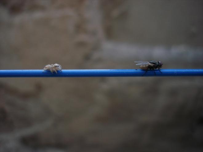 Cứ gặp nhện là đánh – Liệu chúng ta có nên giết những con nhện nhà hay không? - Ảnh 2.