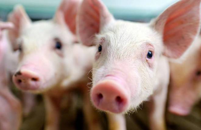 Nghiên cứu mới cho thấy động vật có vú có thể thở bằng đoạn ruột gần mông - Ảnh 1.