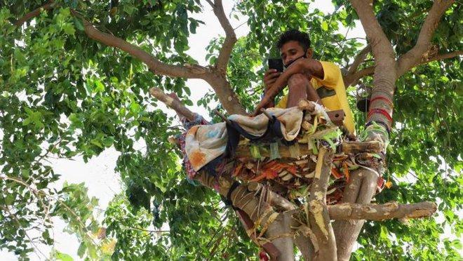 Ấn Độ: Nhiều bệnh nhân Covid-19 tự cách ly hàng chục ngày trên cây như trong phim Tarzan - Ảnh 1.