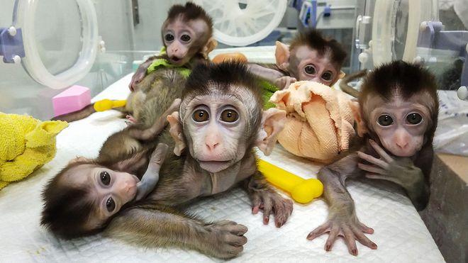 Đại dịch COVID-19 khiến Trung Quốc hết sạch khỉ để thí nghiệm - Ảnh 3.