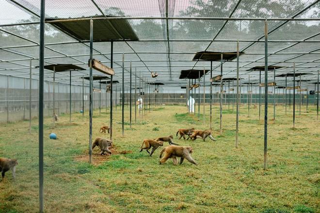 Đại dịch COVID-19 khiến Trung Quốc hết sạch khỉ để thí nghiệm - Ảnh 2.