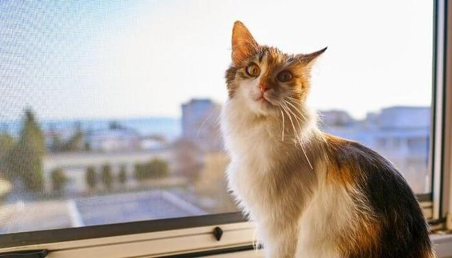 Tại sao mèo có thể ngã từ tầng 32 xuống đất mà vẫn sống sót? - Ảnh 6.