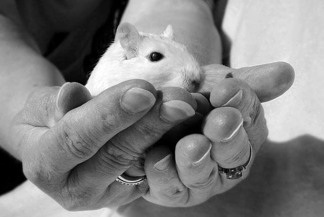 Thiên đường chuột: thí nghiệm về một xã hội thu nhỏ vẽ ra những kết luận rùng rợn về tương lai con người (Phần 2) - Ảnh 1.