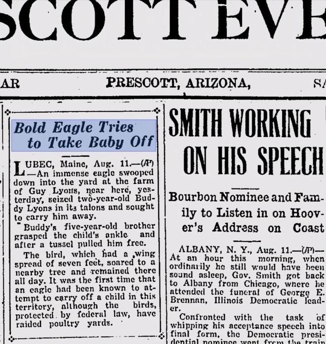 Đại bàng đầu trắng đã từng trở thành con mồi của những thợ săn tiền thưởng tại Mỹ - Ảnh 7.
