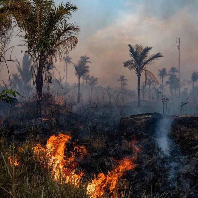 Nghiên cứu đáng buồn: rừng Amazon đã trở thành nguồn gây ô nhiễm không khí, tỏa ra nhiều CO2 hơn lượng nó hấp thụ được - Ảnh 1.