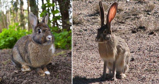 Những loài động vật mới nhìn qua có thể bạn sẽ nhầm lẫn chúng với nhau - Ảnh 1.