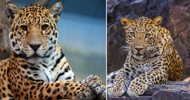 Những loài động vật mới nhìn qua có thể bạn sẽ nhầm lẫn chúng với nhau - Ảnh 7.