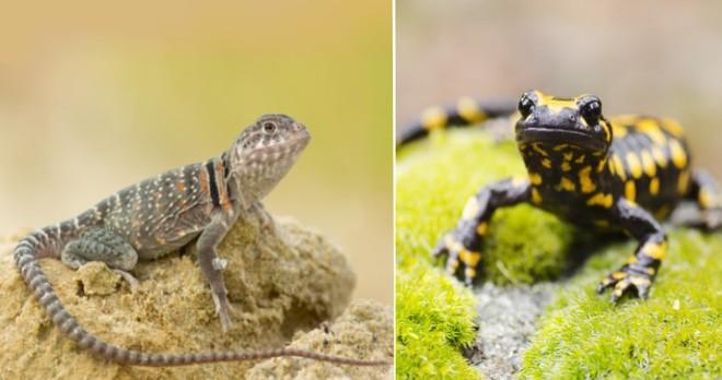 Những loài động vật mới nhìn qua có thể bạn sẽ nhầm lẫn chúng với nhau - Ảnh 4.
