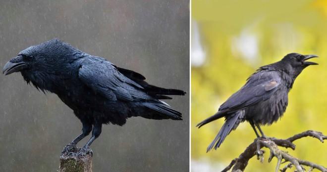 Những loài động vật mới nhìn qua có thể bạn sẽ nhầm lẫn chúng với nhau - Ảnh 3.