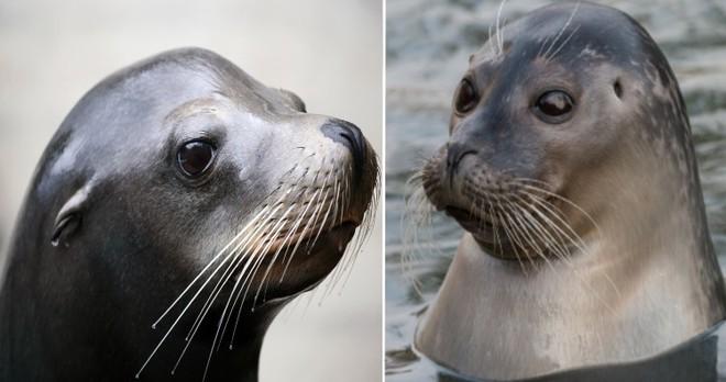 Những loài động vật mới nhìn qua có thể bạn sẽ nhầm lẫn chúng với nhau - Ảnh 6.