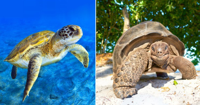 Những loài động vật mới nhìn qua có thể bạn sẽ nhầm lẫn chúng với nhau - Ảnh 2.