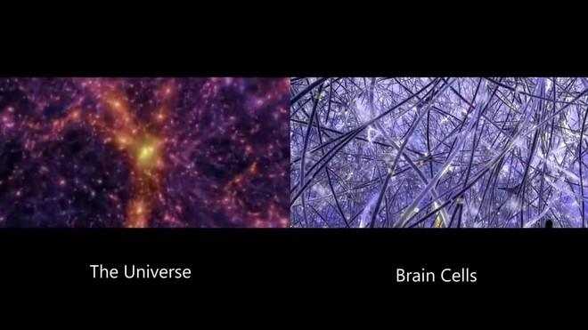 Các nhà khoa học giải mã bí ẩn về ý thức, bộ não con người có thể hoạt động theo 11 chiều - Ảnh 3.