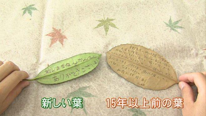 Đẳng cấp dịch vụ bưu chính Nhật Bản: Chỉ cần dán tem, một chiếc lá cũng được chuyển giao nguyên vẹn - Ảnh 3.