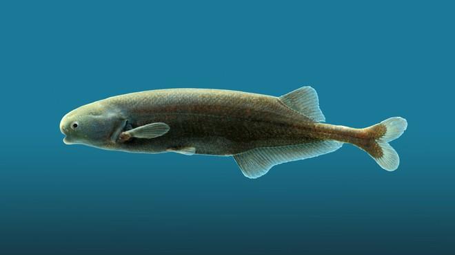 Những con cá này có thể thuyết trình theo phong cách của cựu Tổng thống Mỹ Obama - Ảnh 1.