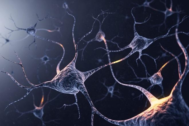 Não bộ của bạn có bao nhiêu neuron thần kinh? Và chúng đang làm gì trong đó? - Ảnh 3.