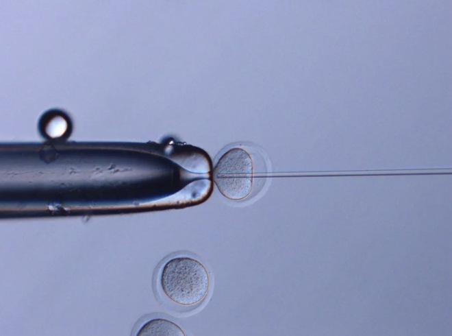 Sau gần sáu năm trên trạm vũ trụ, tinh trùng chuột đông lạnh tạo ra những chú chuột con khỏe mạnh - Ảnh 1.