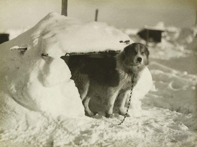 Cuộc phiêu lưu ở Nam Cực của một chú mèo mang tên Chippy - Ảnh 10.