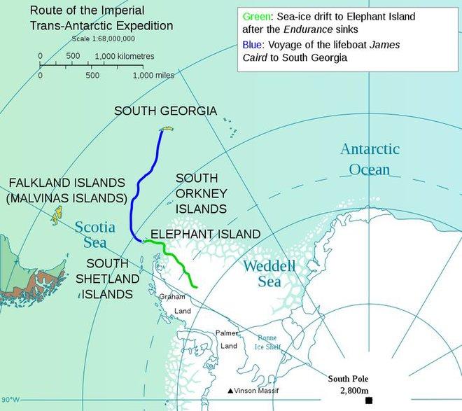Cuộc phiêu lưu ở Nam Cực của một chú mèo mang tên Chippy - Ảnh 11.
