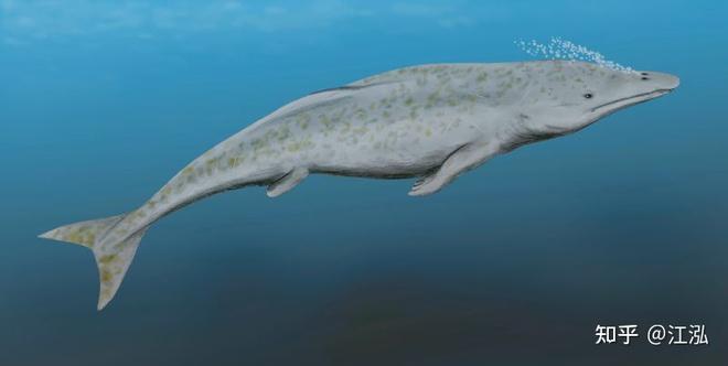 Tại sao lỗ mũi của cá voi lại nằm trên đỉnh đầu? - Ảnh 3.