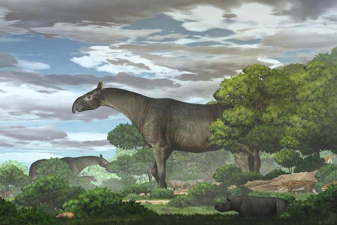 Tê giác khổng lồ được khai quật ở Trung Quốc là một trong những loài động vật có vú lớn nhất từng sống trên Trái Đất - Ảnh 1.