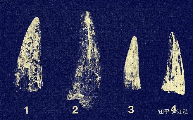 Phát hiện loài cá sấu cổ đại tại Australia có khả năng chạy nhanh trên cạn cách đây 40.000 năm - Ảnh 1.