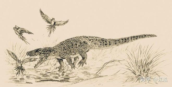 Phát hiện loài cá sấu cổ đại tại Australia có khả năng chạy nhanh trên cạn cách đây 40.000 năm - Ảnh 5.