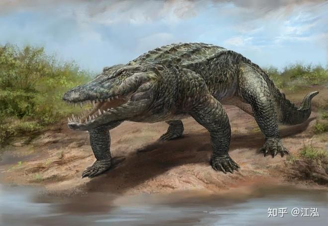 Phát hiện loài cá sấu cổ đại tại Australia có khả năng chạy nhanh trên cạn cách đây 40.000 năm - Ảnh 6.