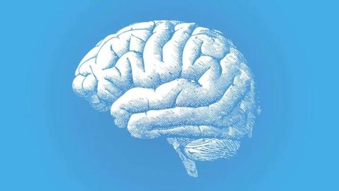 Gen con người tiêm vào khỉ đã khiến cho bộ não của chúng đã phát triển to hơn và khỏe hơn - Ảnh 1.