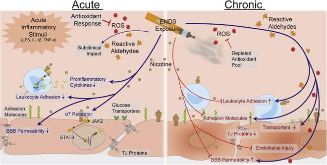 Sau 20 năm, những bằng chứng đầu tiên về tác hại của thuốc lá điện tử tới não bộ đã được tìm thấy - Ảnh 3.
