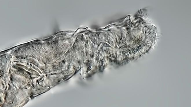 Hồi sinh thành công một loài động vật bị đóng băng sau 24.000 năm - Ảnh 2.