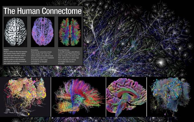 Chúng ta sẽ tải được não bộ lên máy tính để bất tử trong vòng 100 năm nữa? - Ảnh 3.