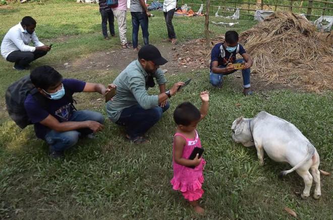 Bất chấp Covid-19 đang bùng phát, dân Bangladesh đổ xô đi chụp ảnh selfie với con bò nhỏ nhất thế giới - Ảnh 2.
