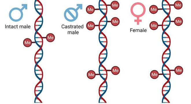 Nam giới có thể tăng tuổi thọ bằng cách tự cung - Ảnh 2.