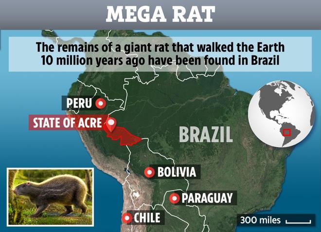 Loài chuột khổng lồ to như con người nhưng não thì bé tí này từng thống trị Brazil thời tiền sử - Ảnh 5.