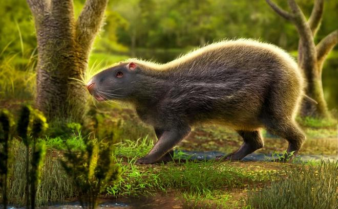Loài chuột khổng lồ to như con người nhưng não thì bé tí này từng thống trị Brazil thời tiền sử - Ảnh 2.