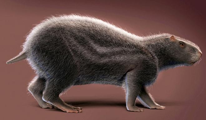 Loài chuột khổng lồ to như con người nhưng não thì bé tí này từng thống trị Brazil thời tiền sử - Ảnh 3.