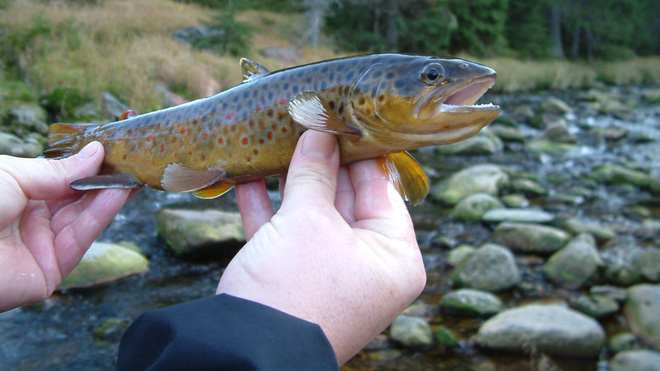 Cá hồi đang trở nên nghiện ngập vì nước thải con người đổ ra tự nhiên chứa dư lượng ma túy đá - Ảnh 1.