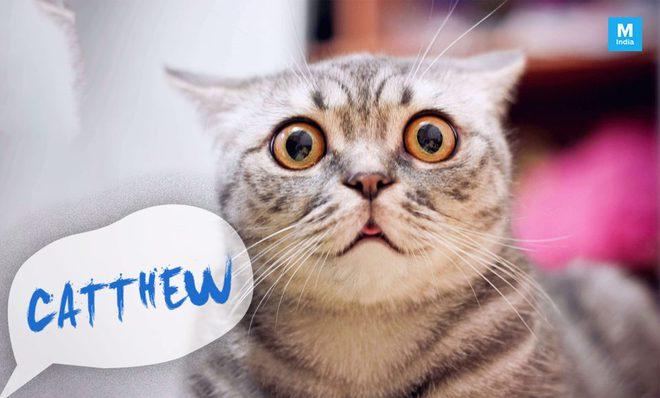 Đây là cách kiểm tra con mèo nhà bạn có biết tên bạn đặt cho nó hay không - Ảnh 1.