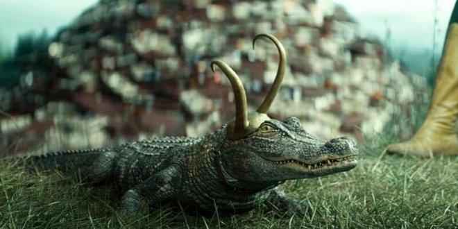 Hé lộ danh tính diễn viên Loki cá sấu: Thú cưng giúp chủ vượt qua trầm cảm, có cả giấy phép để hành nghề an ủi con người - Ảnh 1.