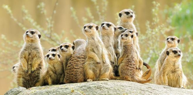 Đi tìm loài động vật lắm mồm nhất trong thế giới tự nhiên - Ảnh 2.