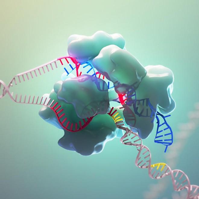 Các nhà khoa học Úc đã tìm ra cách tiêu diệt virus SARS-CoV-2 trong tế bào người - Ảnh 1.