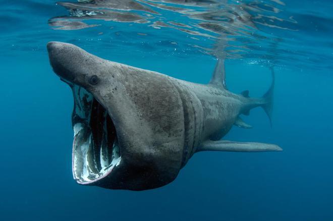 Lẽ nào siêu cá mập Megalodon vẫn đang còn sống dưới đại dương sâu thẳm? - Ảnh 5.