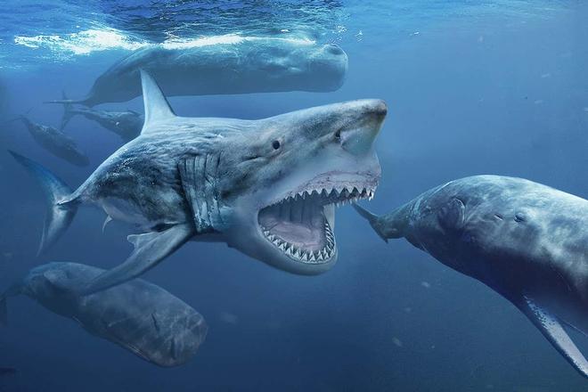 Lẽ nào siêu cá mập Megalodon vẫn đang còn sống dưới đại dương sâu thẳm? - Ảnh 1.