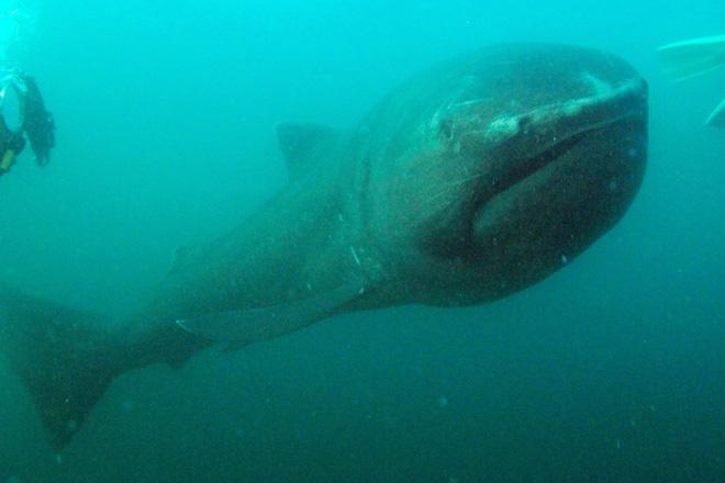 Lẽ nào siêu cá mập Megalodon vẫn đang còn sống dưới đại dương sâu thẳm? - Ảnh 7.