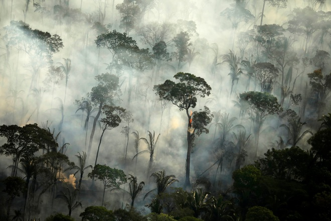Thải ra nhiều CO2 hơn mức hấp thụ được, các nhà khoa học xác nhận rừng Amazon không còn là lá phổi xanh của Trái Đất - Ảnh 1.