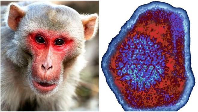 Trung Quốc lại báo cáo một virus lây từ khỉ sang người, nạn nhân đầu tiên đã tử vong - Ảnh 1.